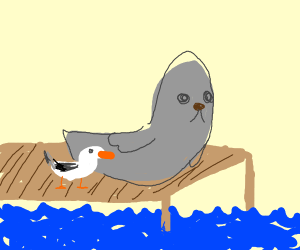 Seagull and a seal on a dock