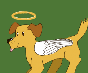 Heavenly doggo