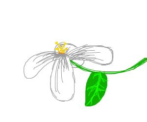 Realist Flower