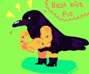 Best birds pio