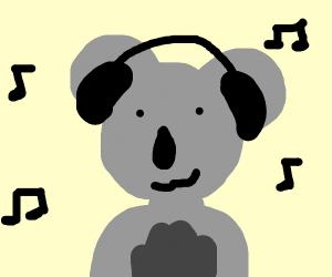 Koala is a music fan