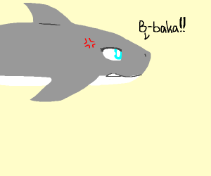 sharks, the most tsundere of marine life