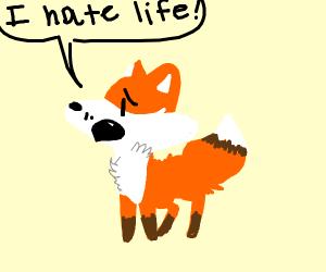 Fox that hates life
