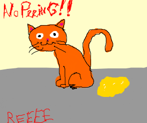 Cat is going to pee on the floor