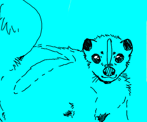 skunk and blue background