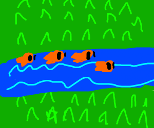 A river with orange fish