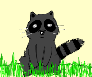 A lil' raccoon