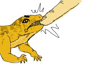lizard bitting a finger