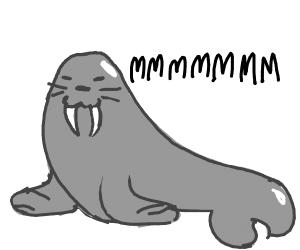 walrus mmmmmmm