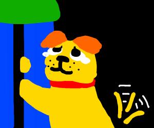 Dog loves you