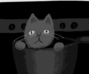 unknowing kitten about to be boiled in a pot