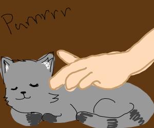 Cat Equals Pet