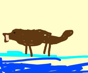 Dog walks on water like jesus