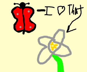 butterfly loves flowers