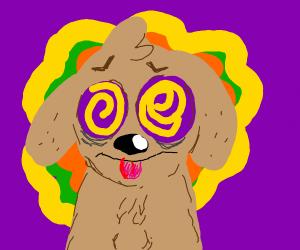 dog on LSD
