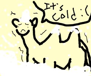 Camel in snow