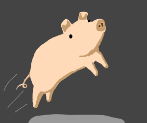 Pig on a bout