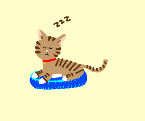 tabby cat sleeping on blue cat bed