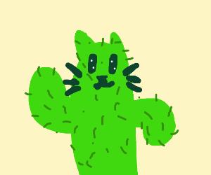 cactus cat!