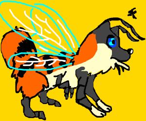 shiba-bee hybrid