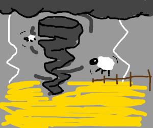 Tornado takes sheep