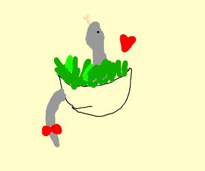 snake loves her salad