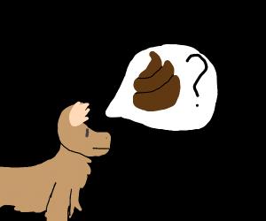 Dog sniffing poo