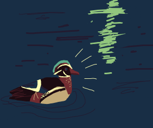 Wood Duck (species)
