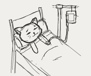 cat in hospital