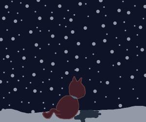 Cat in the winter snow