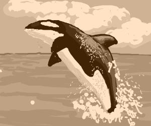 byootiful orca