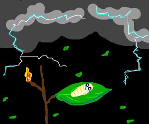 sad maggot on leaf in thunder storm