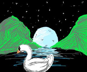 Swan at Moonlight Lake