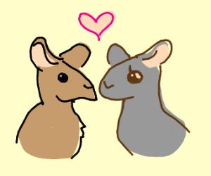 mice couple