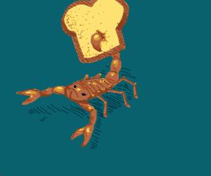 toast scorpion
