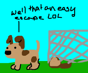 Dog easily escapes the yard