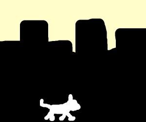 cat walking in dark city