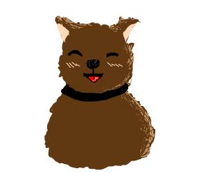 Cute fluffy friend