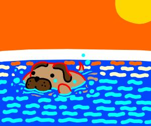 Chubby doggo swimming