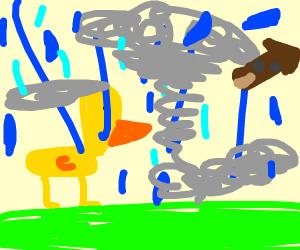 duck in hurricane