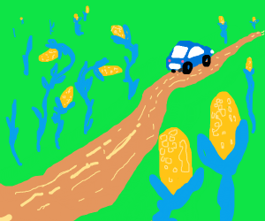 Driving down a dirt road in corn country