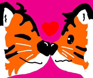 Two tigers boop noses