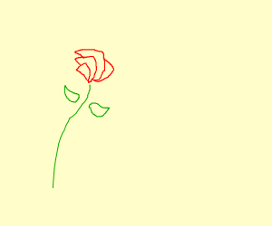 minimalistic rose