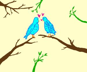Two Blue Birds in Love