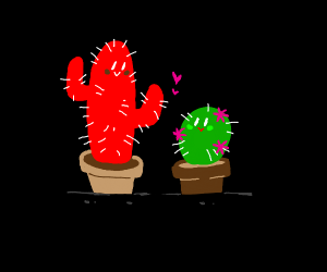 red and green cactus in love
