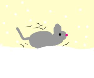 Cold rat