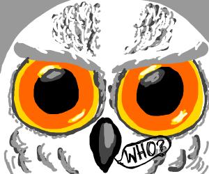 WHO said I looked like an owl? WHO?