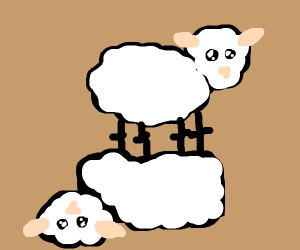 2 sheep standing on top of each other