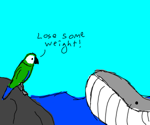 Parrot verbally abusing whale