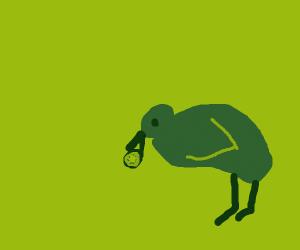 kiwi eating kiwis